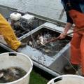 Malderborgh afvissen 2006