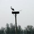 image ooienvaars-nest-nu-bewoond-op-12-04-2013-10-jpg