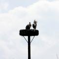 image ooienvaars-nest-nu-bewoond-op-12-04-2013-2-jpg