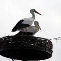 image ooienvaars-nest-nu-bewoond-op-12-04-2013-3-jpg