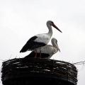 image ooienvaars-nest-nu-bewoond-op-12-04-2013-4-jpg