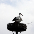 image ooienvaars-nest-nu-bewoond-op-12-04-2013-5-jpg