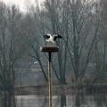 image ooienvaars-nest-nu-bewoond-op-12-04-2013-6-jpg