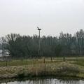 image ooienvaars-nest-nu-bewoond-op-12-04-2013-8-jpg