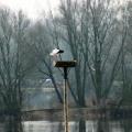 image ooienvaars-nest-nu-bewoond-op-12-04-2013-9-jpg
