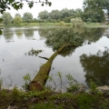 image stormschade-kasteelshehof-28-07-2013-19-jpg