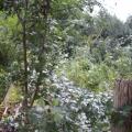 image stormschade-kasteelshehof-28-07-2013-26-jpg