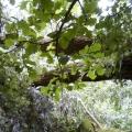 Stormschade kasteelschehof 28-07-2012  28-10-2012