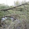 image verwijderen-omgewaaideboom-bij-ijzeren-brug-16-05-2013-1-jpg