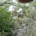 image verwijderen-omgewaaideboom-bij-ijzeren-brug-16-05-2013-12-jpg