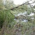 image verwijderen-omgewaaideboom-bij-ijzeren-brug-16-05-2013-2-jpg