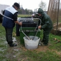 image vis-uitgezetting-in-ooijpolder-2011-104-jpg