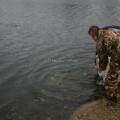 image vis-uitgezetting-in-ooijpolder-2011-16-jpg