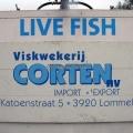 Vis uitgezetting in Ooijpolder 2011