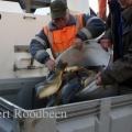 image 2e-vis-uitzetting-2011-15-jpg