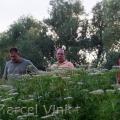 image vissterfte-jonkermanshof-2007-25-jpg
