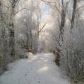 image winterfotos-kasteelshehof-11-09-2012-6-jpg
