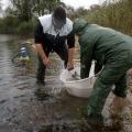 image vis-uitgezetting-in-ooijpolder-2011-102-jpg