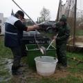 image vis-uitgezetting-in-ooijpolder-2011-103-jpg