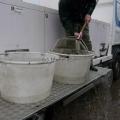 image vis-uitgezetting-in-ooijpolder-2011-19-jpg