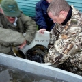 image vis-uitgezetting-in-ooijpolder-2011-22-jpg