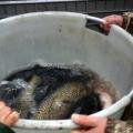 image vis-uitgezetting-in-ooijpolder-2011-26-jpg