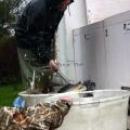 image vis-uitgezetting-in-ooijpolder-2011-28-jpg