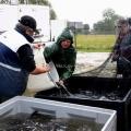 image vis-uitgezetting-in-ooijpolder-2011-3-jpg