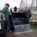 is uitgezetting in Ooijpolder 2011