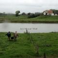 image vis-uitgezetting-in-ooijpolder-2011-95-jpg