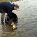 image vis-uitgezetting-in-ooijpolder-2011-98-jpg