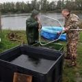 image vis-uitgezetting-in-ooijpolder-2011-99-jpg